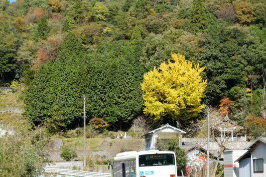白川喜和田神社の銀杏(2017年11月11日)