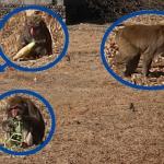 可部護国神社そばでお猿さん