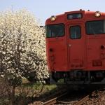 モクレンとキハ40系(芸備線 矢賀〜戸坂)