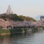 平和記念公園、元安川沿いの桜 3月28日