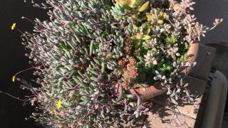 4月29日の多肉植物