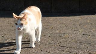通勤途中の猫さん 近寄る