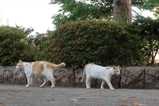 通勤途中の猫さん 仲間と挨拶
