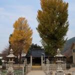 友廣神社の銀杏