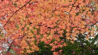 平和大通り沿いの残り少ない紅葉