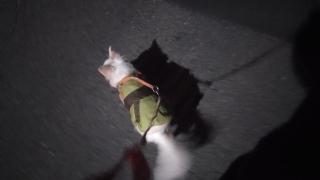 2月6日も夜散歩に行く「もか」
