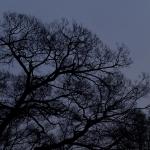通勤途中の木