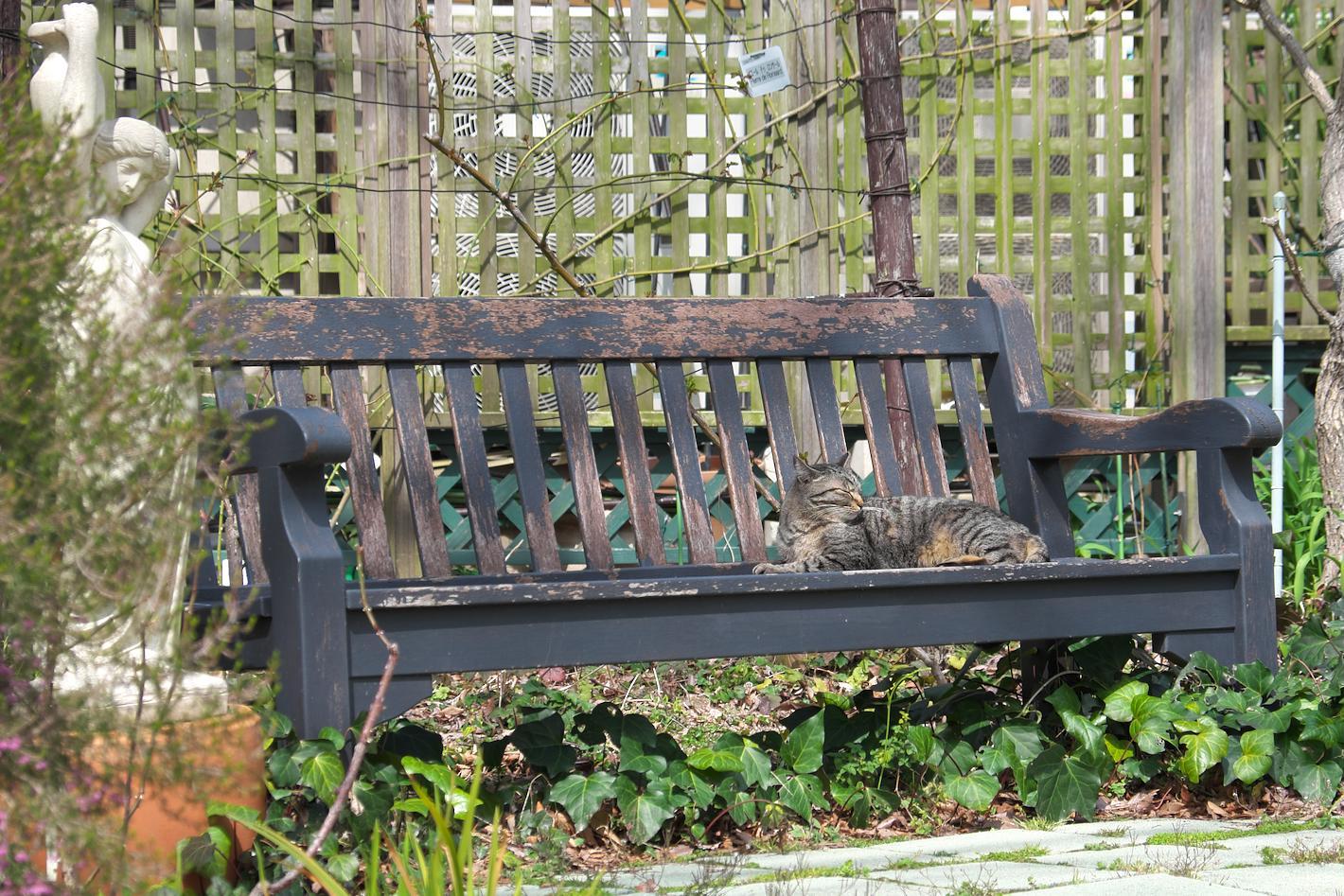 ベンチでのんびりする猫さん