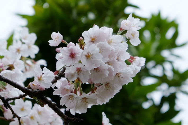 先週の蕾、キレイに咲いていました