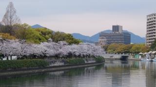 原爆ドームと桜 2020年