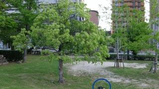 緑地公園の木、ナニカあります