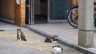 集会が終わった(?)猫さんたち
