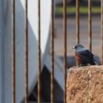 佇む鳥(種類がわからない)