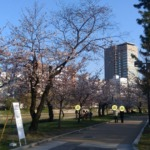 元安川河畔の桜 2021年3月25日
