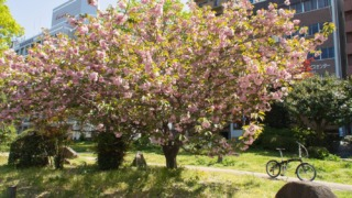 平和大通りに咲いていた花 2021年4月11日